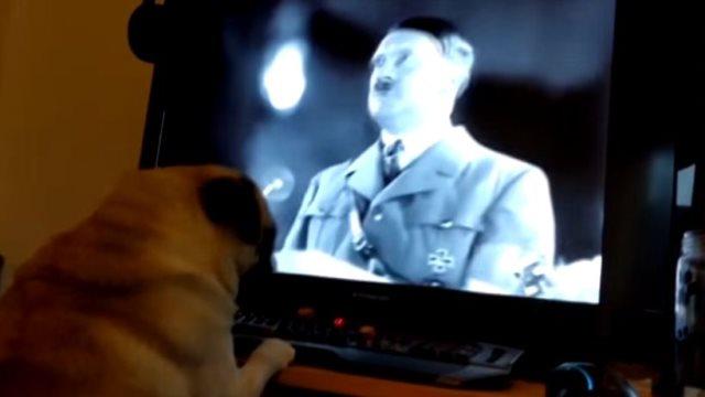 Βίντεο: Πρόστιμο 950 ευρώ σε ιδιοκτήτη που έμαθε τον σκύλο του να... χαιρετά ναζιστικά!