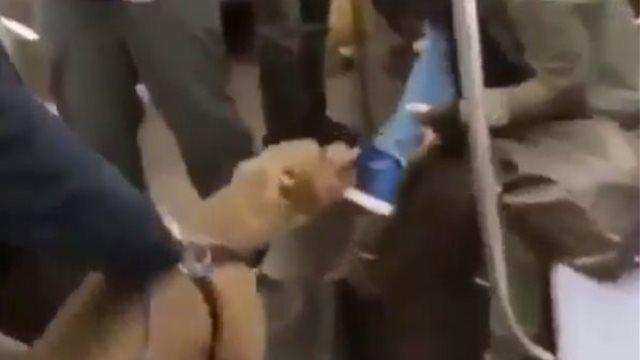 Βίντεο σοκ: Πίτμπουλ επιτίθεται σε γυναίκα μέσα σε βαγόνι του μετρό