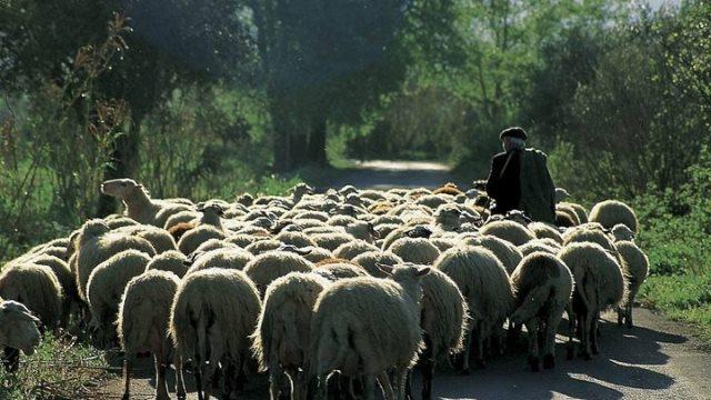 Κρήτη: Αλλοδαπός βοσκός ξυλοκόπησε ηλικιωμένο κτηνοτρόφο