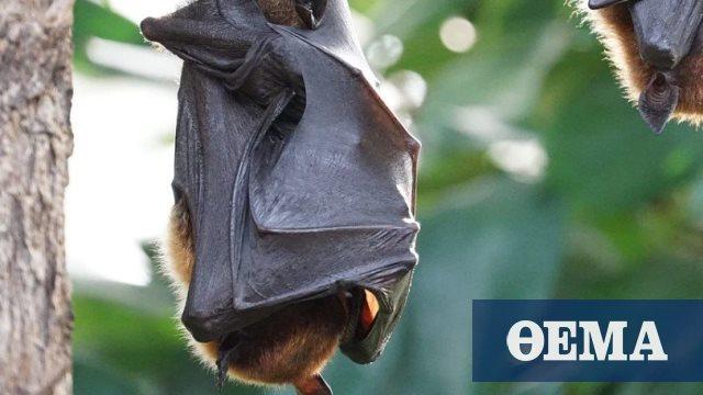 Κορωνοϊός: Σε νυχτερίδες στο Λάος εντοπίστηκαν οι τρεις πιο κοντινές εκδοχές του SARS-CoV-2 - Πρώτο Θέμα