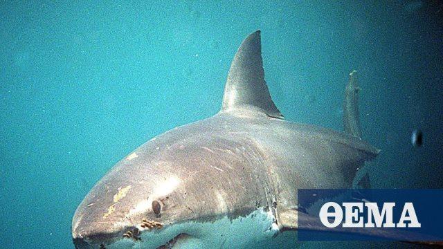 Νεκρός άνδρας από επίθεση καρχαρία σε δημοφιλή τουριστική περιοχή