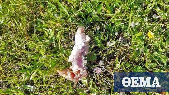Mαζική δηλητηρίαση σκύλων στο Ηράκλειο Κρήτης