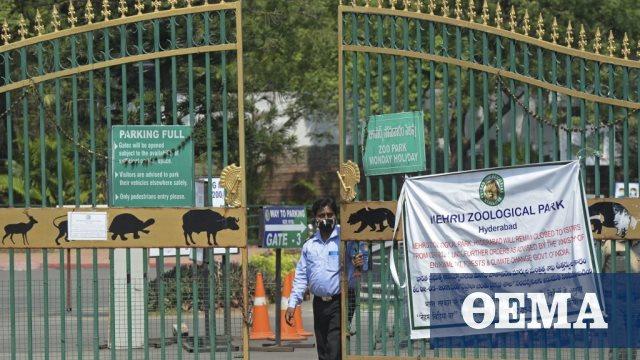 Θετικά στον κορωνοϊό οκτώ λιοντάρια σε ζωολογικό κήπο