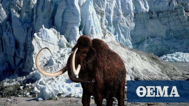 ΗΠΑ: Μια εταιρεία βιοτεχνολογίας θέλει να αναδημιουργήσει τα μαλλιαρά μαμούθ - Δείτε φωτογραφίες