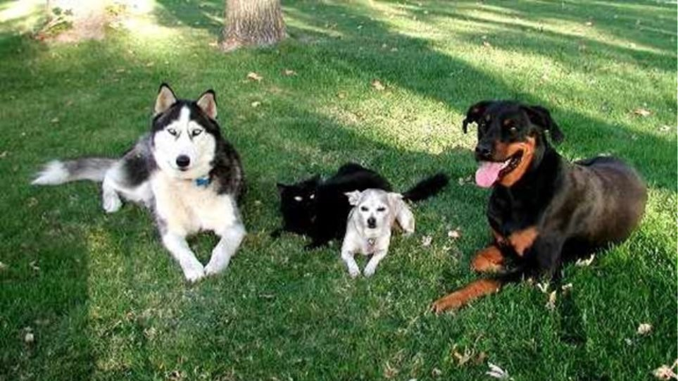 Δηλητηρίασαν 15 σκυλιά στην Κοζάνη