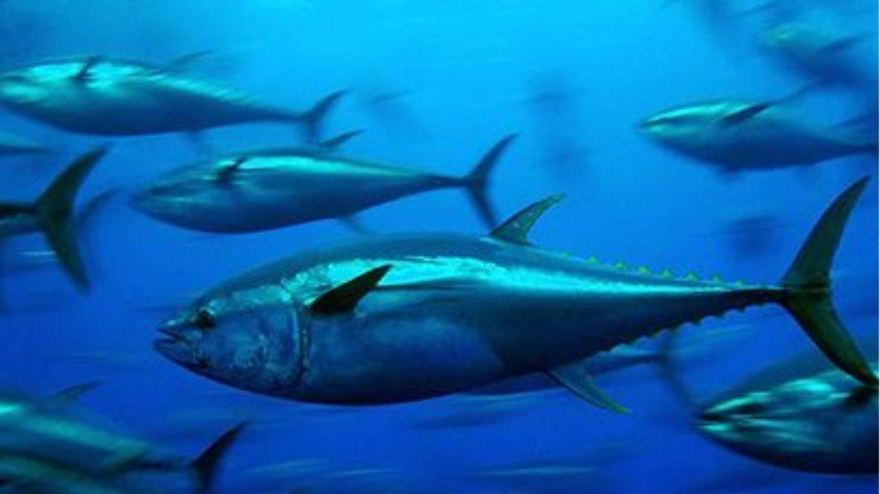 Απαγόρευση αλιείας με γρι- γρι στον Μαλιακό κόλπο