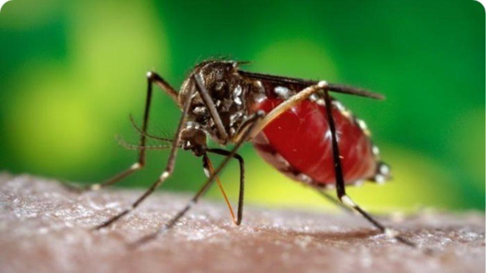 Θερίζει ο δάγκειος πυρετός στο Περού