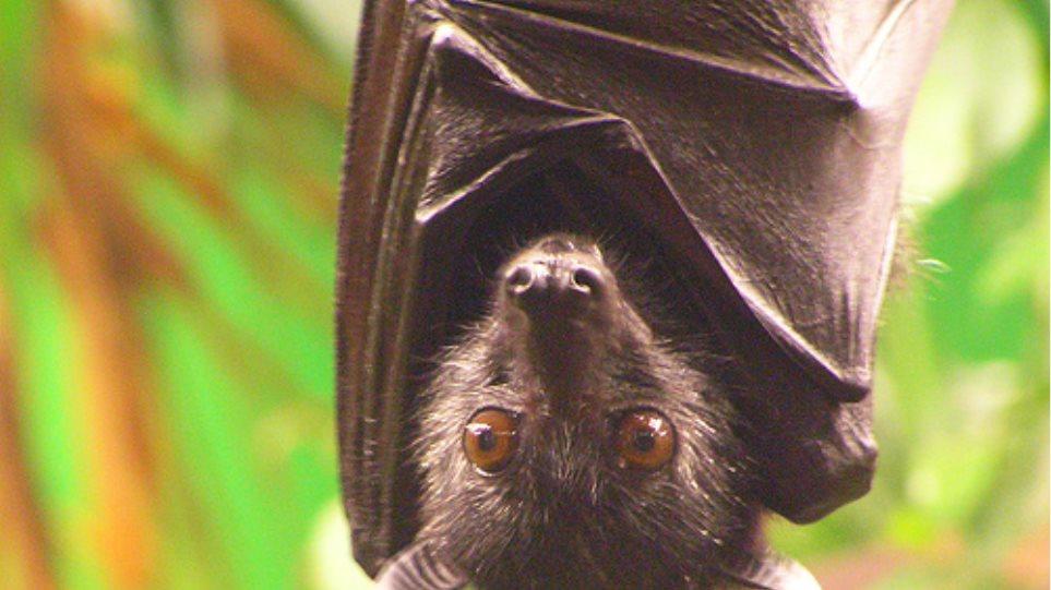 Νυχτερίδες με αισθήματα ανθρώπου