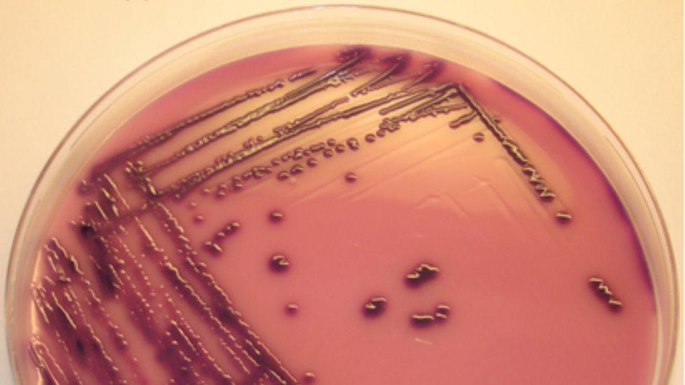 Δύο κρούσματα άμεσης μετάδοσης του E.coli στη Δανία