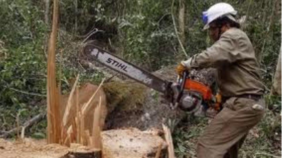 Έρχονται από την Αλβανία για να κόψουν δέντρα!