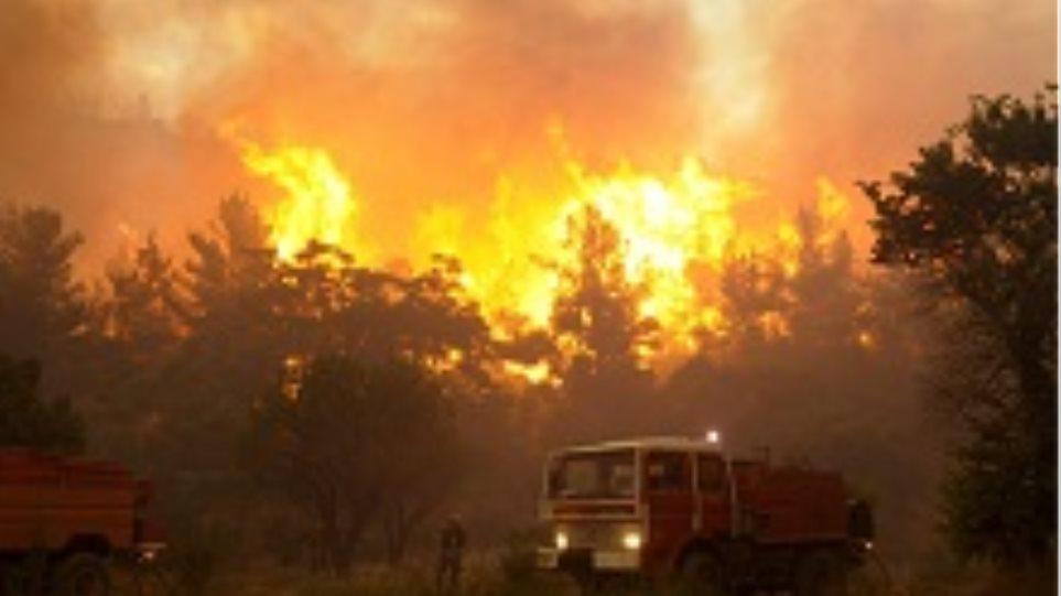 Φωτιά στην περιοχή Φραξίλα στην Πρέβεζα