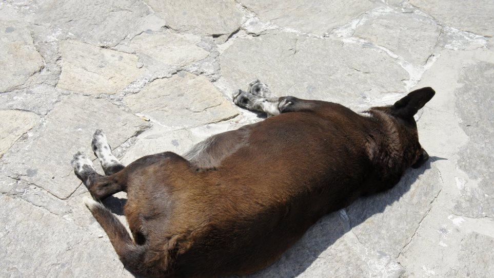 Σκότωσαν σκύλο για να κλέψουν ένα κινητό!