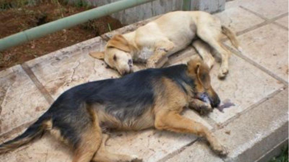 Νέες δηλητηριάσεις ζώων στην Λαμία