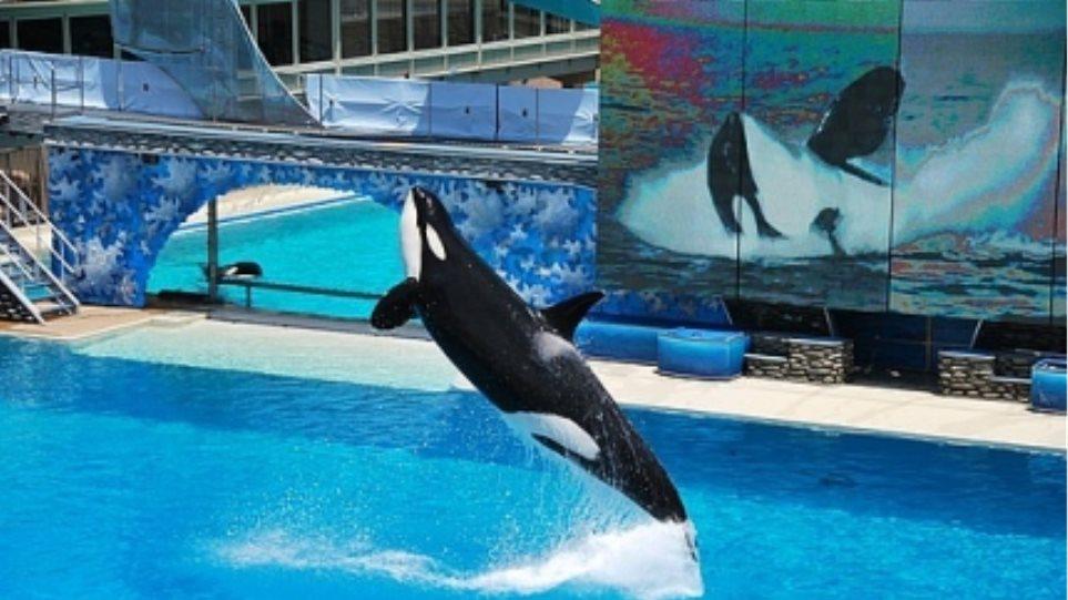 Πέντε φάλαινες... μήνυσαν τα SeaWorld!