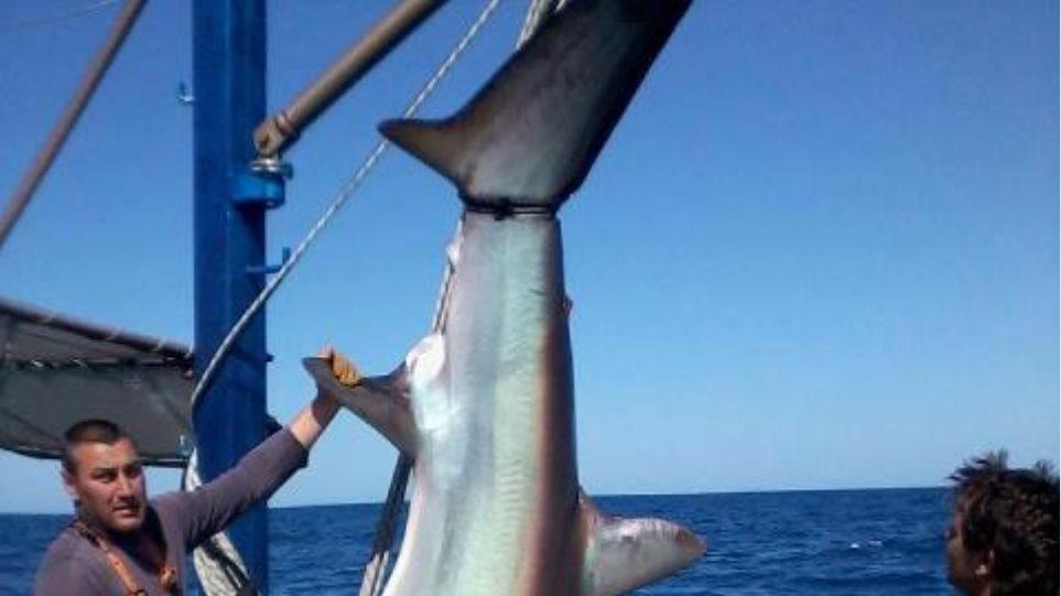 «Σούπερ» ψαριά με τρίμετρο καρχαρία!
