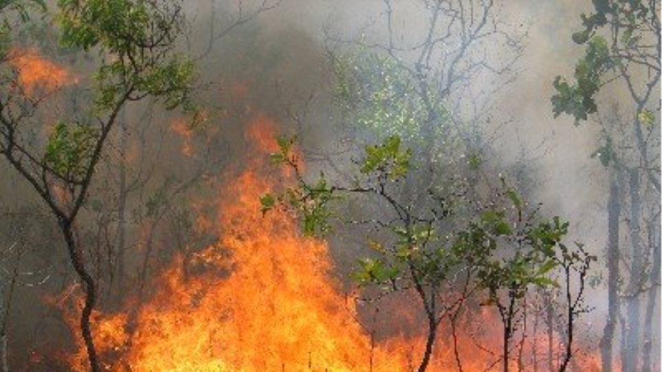 Πυρκαγιά σε δασική έκταση στη Νέα Μαγνησία