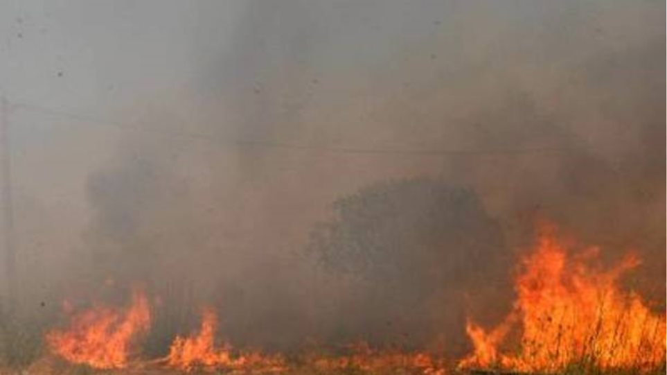 Δασική πυρκαγιά στο Δαμάσι Λάρισας