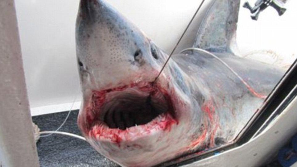 Βάρκα… «στα σαγόνια του καρχαρία»