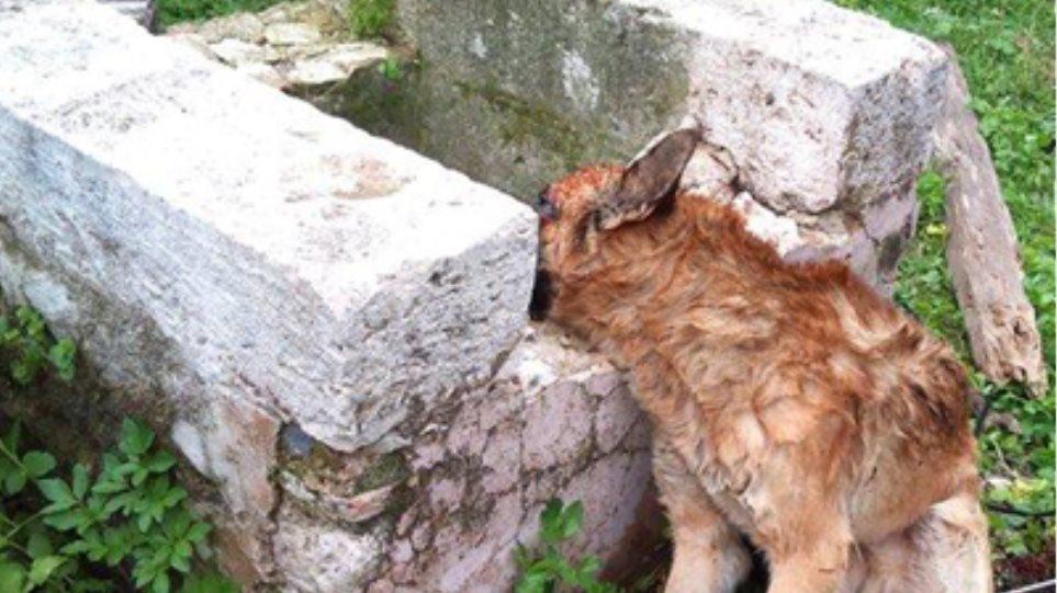 Έπνιξαν επτά ζώα σε πηγάδι στη Ρόδο!