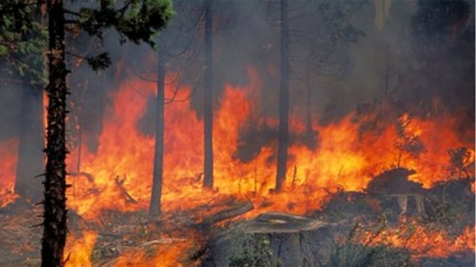 Φωτιά σε ελαιώνα στο Σμάρι Ηρακλείου Κρήτης