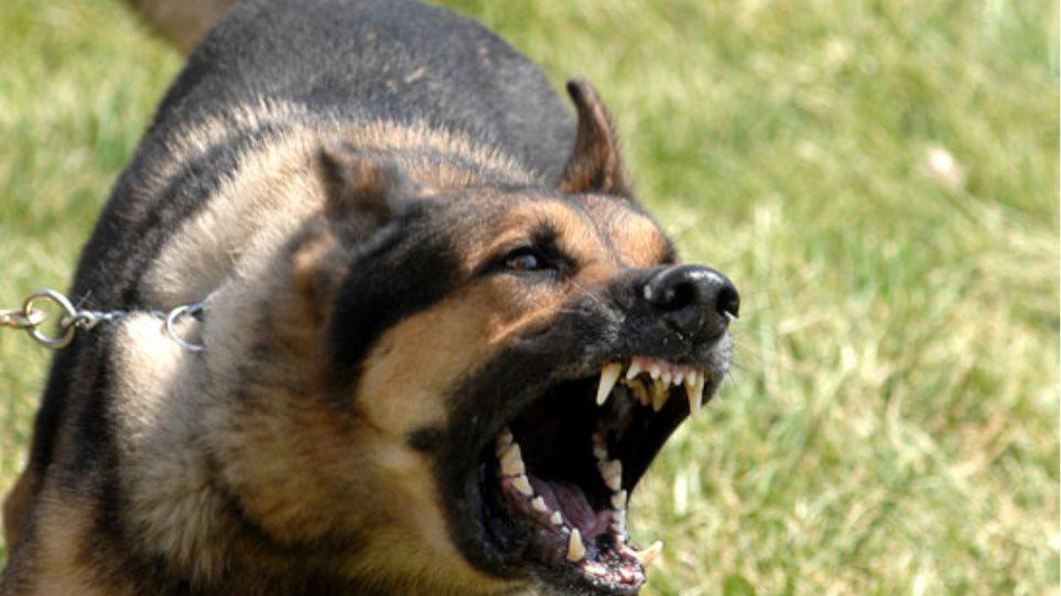 Έβαλε το σκύλο του να επιτεθεί στους αστυνομικούς!
