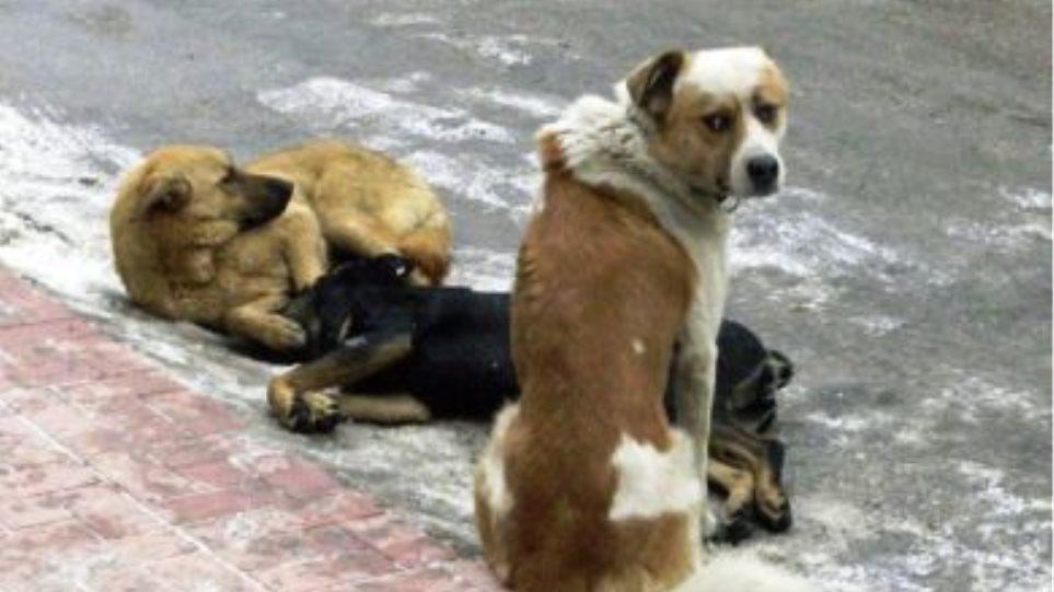 Διοικητής στρατοπέδου «εξαφάνισε» σκυλιά!