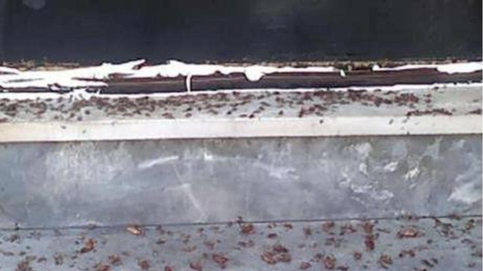 Ζευγάρι στην Πάτρα ζούσε σε σπίτι γεμάτο κατσαρίδες!