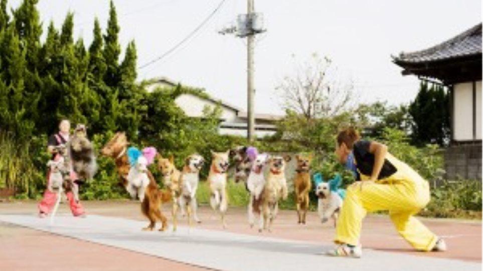 Δεκατρία σκυλάκια κάνουν ταυτόχρονα σχοινάκι