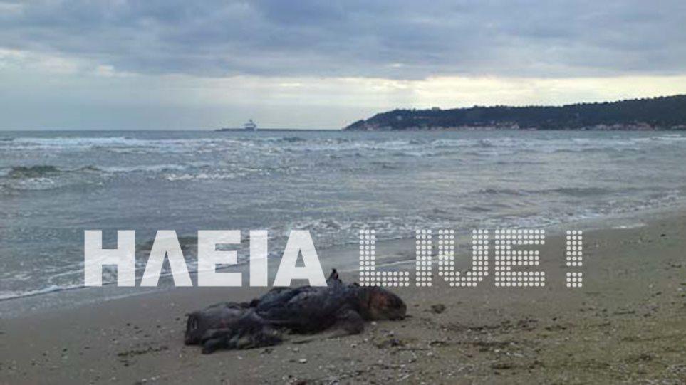 Η θάλασσα ξέβρασε νεκρή καρέτα-καρέτα στο Κατάκολο