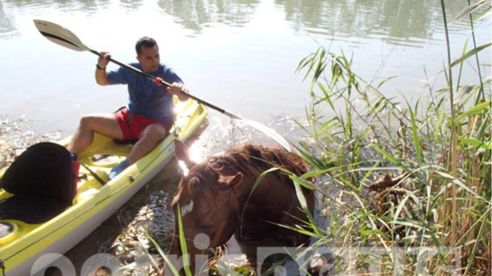 Επιχείρηση της πυροσβεστικής για τον απεγκλωβισμό αλόγου που έπεσε στον Αλφειό