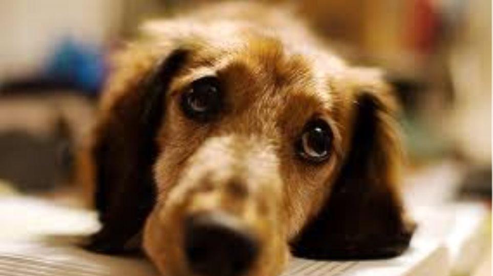 Κρέμασαν σκυλίτσα στο Καλαμάκι Χανίων