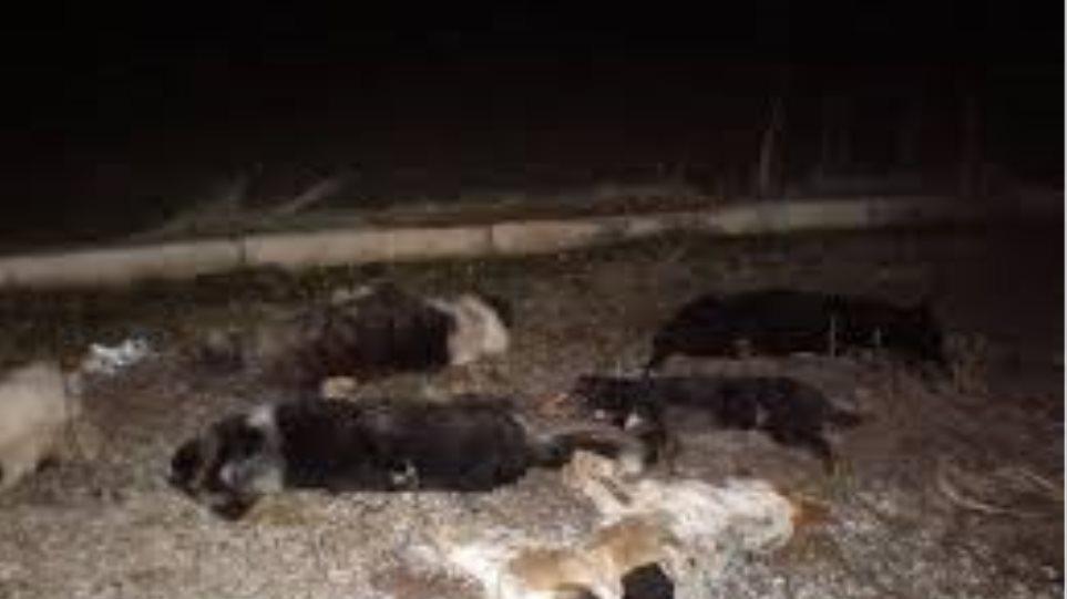 Λάρισα: Επικήρυξαν ασυνείδητο που σκότωσε 16 σκυλιά και γάτες
