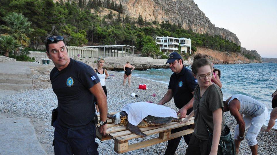 Δείτε φωτογραφίες από διάσωση χελώνας καρέτα-καρέτα στο Ναύπλιο