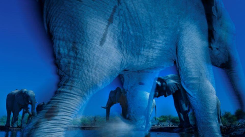 Οι ελέφαντες από την Αφρική κέρδισαν... βραβείο φωτογραφίας!