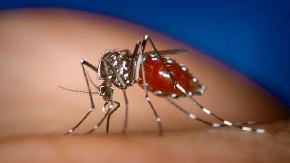 Οκτώ νεκροί και 86 κρούσματα φέτος από τον ιό του Δυτικού Νείλου στην Ελλάδα