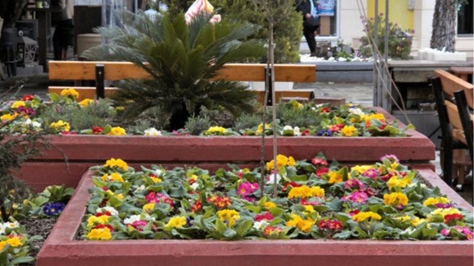 Λάρισα: Συνελήφθη γιατί έκοψε 405 λουλούδια από παρτέρι!