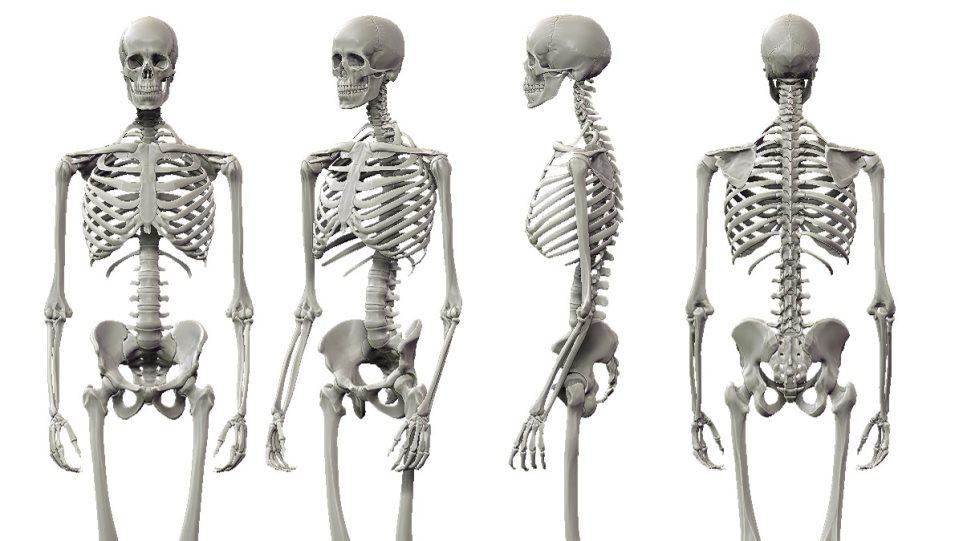 Ο ρόλος της άσκησης στην ανάπτυξη του σκελετού