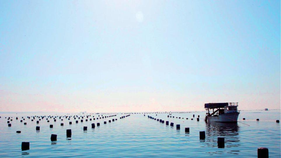 Αλιεία: Έγκριση προγραμμάτων καινοτομίας 3,3 εκατ. ευρώ