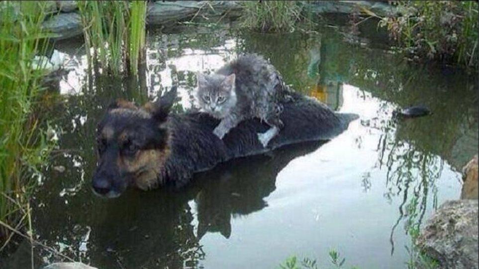 Συγκλονιστική φωτογραφία: Σκύλος σώζει γάτα από τις πλημμύρες στη Βοσνία