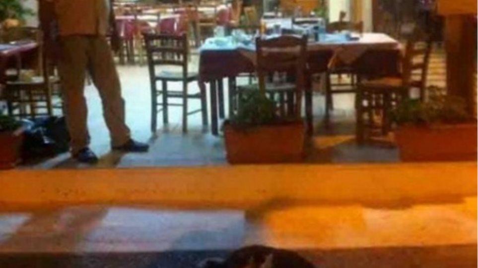 Εύβοια: Πανελλήνια κατακραυγή για τον ταβερνιάρη που σκότωσε σκυλάκι