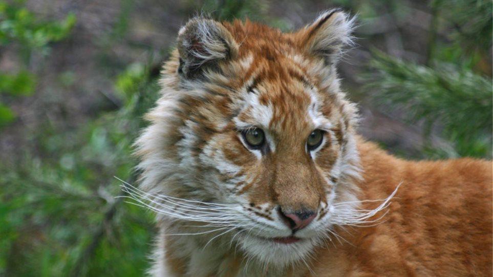 ζώα που χρονολογούνται παράδειγμα καλού προφίλ γνωριμιών στο διαδίκτυο