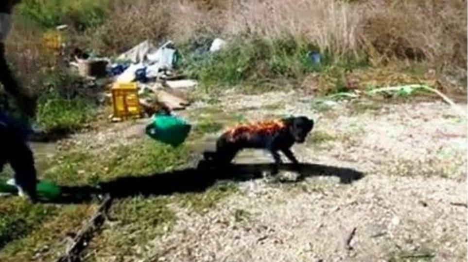 Τρεις ανήλικοι Ρομά έκαψαν ζωντανό σκύλο στην Άρτα!