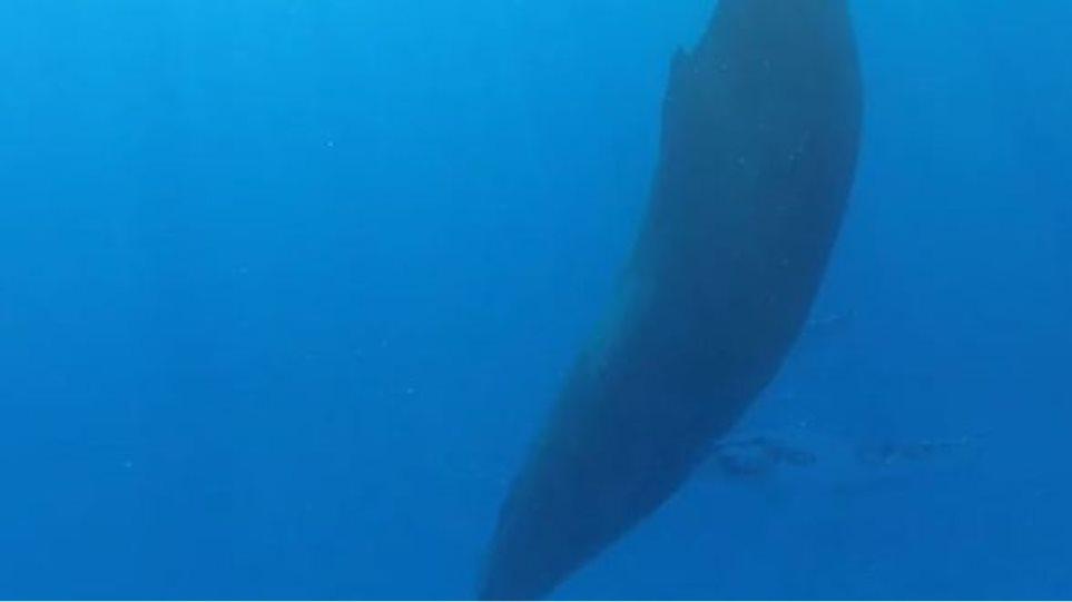 Δείτε σπάνιο βίντεο με φάλαινα τη στιγμή που ξυπνάει
