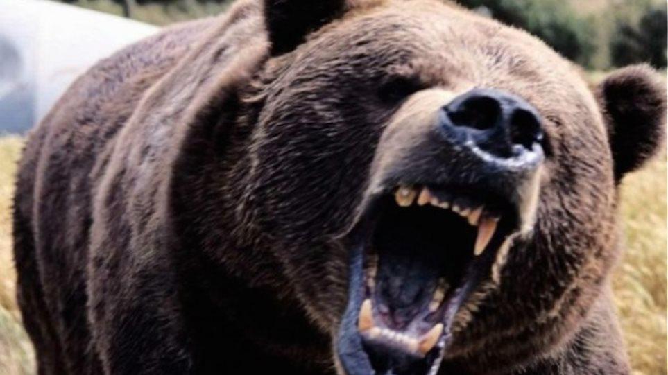 ΗΠΑ: Αρκούδα έτρωγε για μέρες το σώμα ηλικιωμένου άντρα