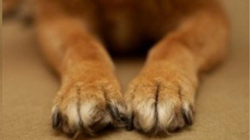 Φόλες θανατώνουν σκυλιά στα Λουτρά της Λέσβου
