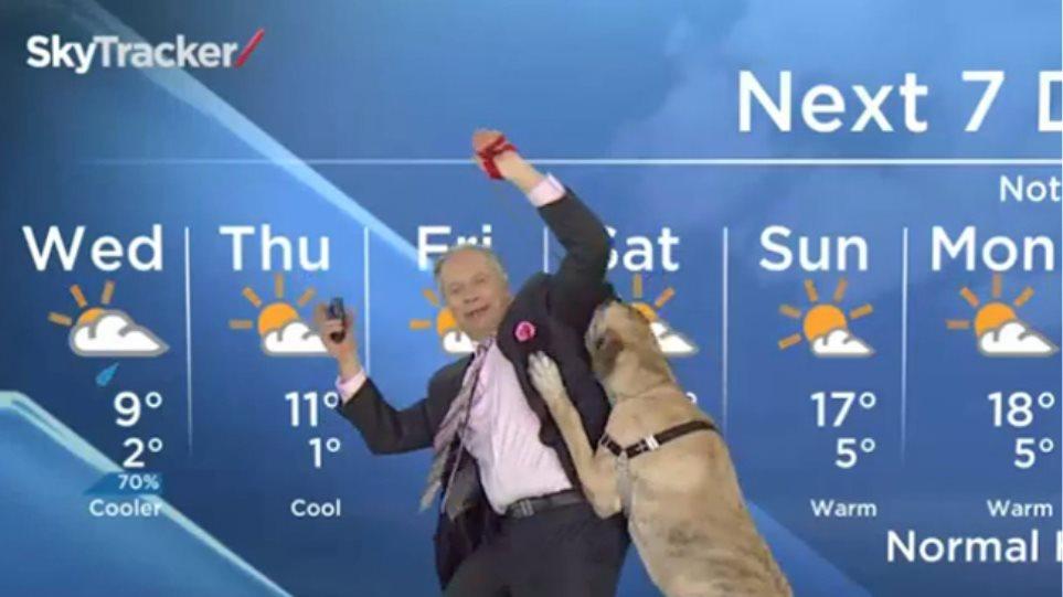 Βίντεο: Σκύλος-μετεωρολόγος, σημειώσατε: 1