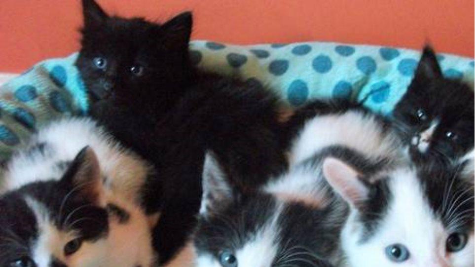 Ζητούνται εθελοντές να αγκαλιάζουν... γατάκια!