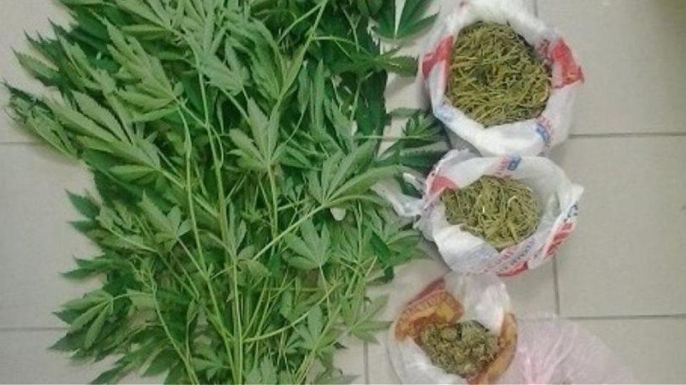 Συλλήψεις χασισοκαλλιεργητών σε Κέρκυρα και Κρήτη