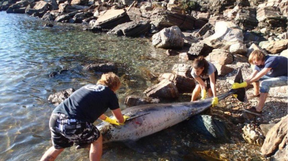 Δελφίνι πνίγηκε από πλαστικά κοντά στη Σάμο
