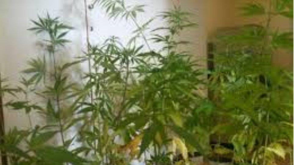 Χασισοκαλλιεργητής είχε ηρωίνη και ναρκωτικά χάπια!